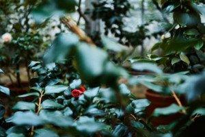 Love Story фотосессия в ботаническом саду 6